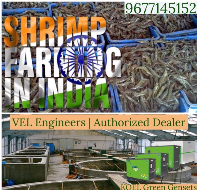Generators for Prawn Cultures in Chennai