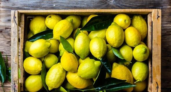 Jeruk Lemonchilibeli