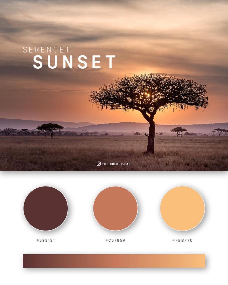 color palettes schemes combos inspiration 8
