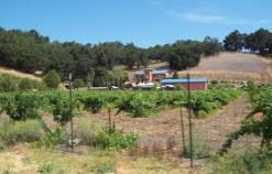 Poalillo Winery on Vineyard.