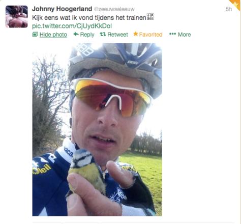 Hoogerland birdy