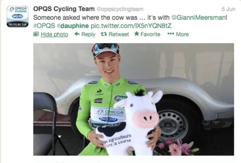 Race Meersman Cow