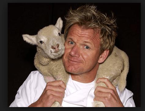 Gordon Ramsay sheep