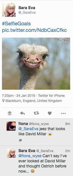 G Millar ostrich