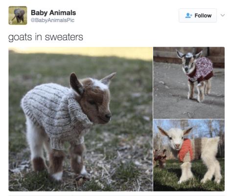 last-word-goats