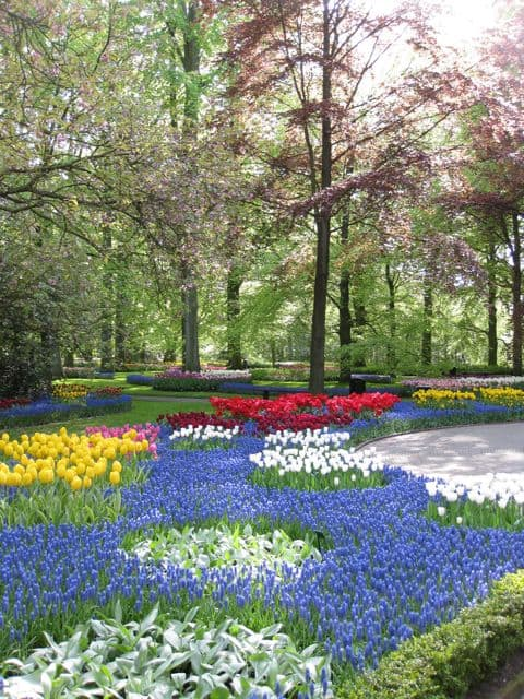 keukenhof-garden-photo