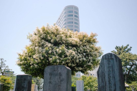 velveteyes.net_mankichi-shinshi_01