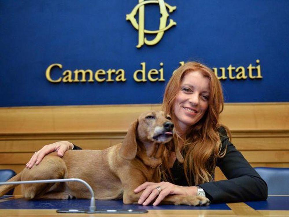 Risultati immagini per primo cane in parlamento