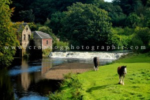 wacky wednesday-crannog-photographic-Heavy-Horses-in-Pollok-Park-Glasgow