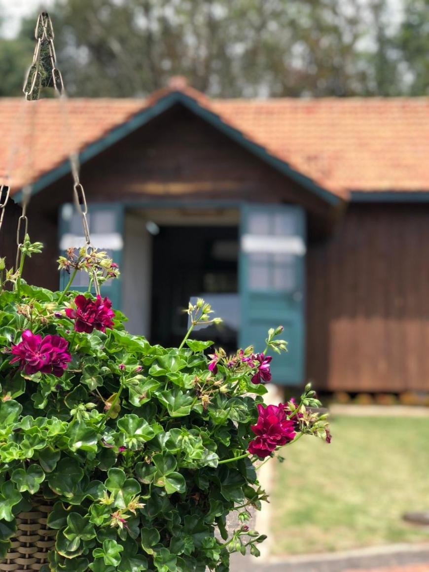 casa das borboletas carambeí