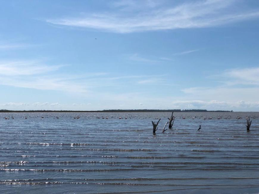 Flamingos na Laguna Mar Chiquita