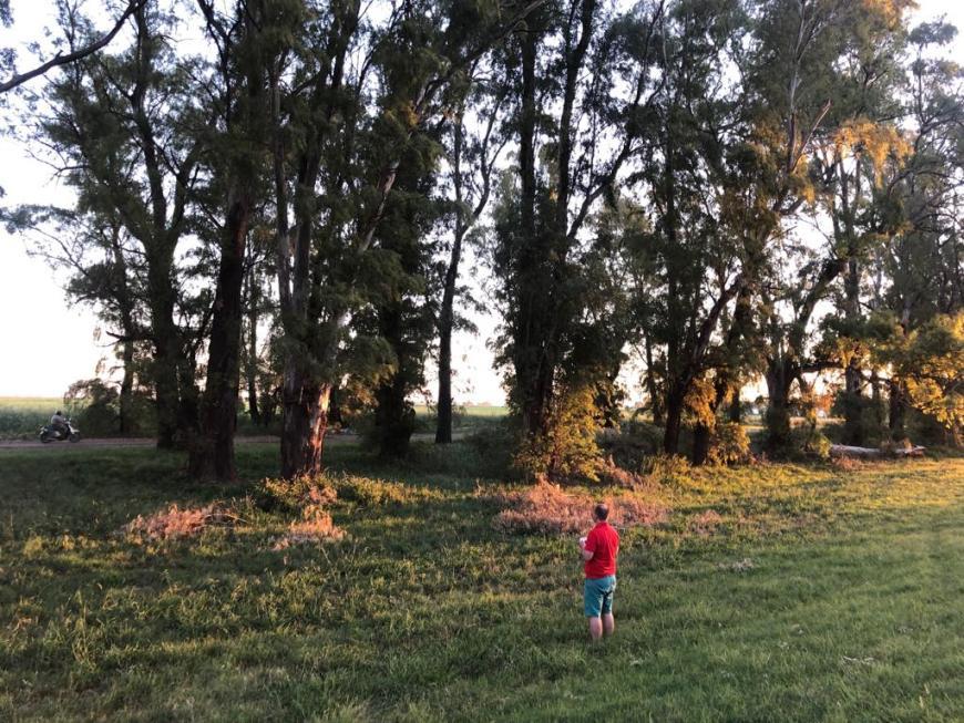 drone preso nas árvores em mendoza