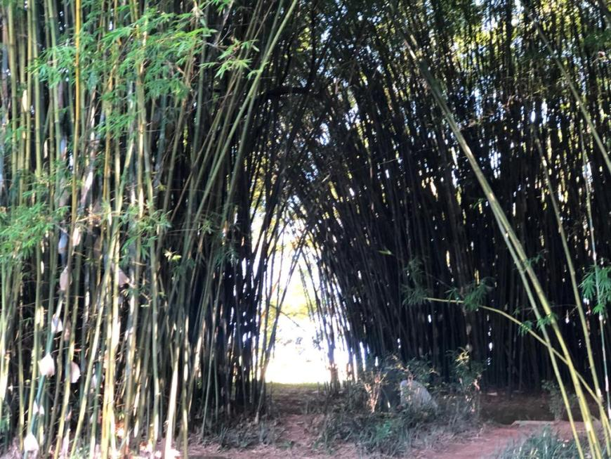 Jardim de Bambu Templo Zu Lai