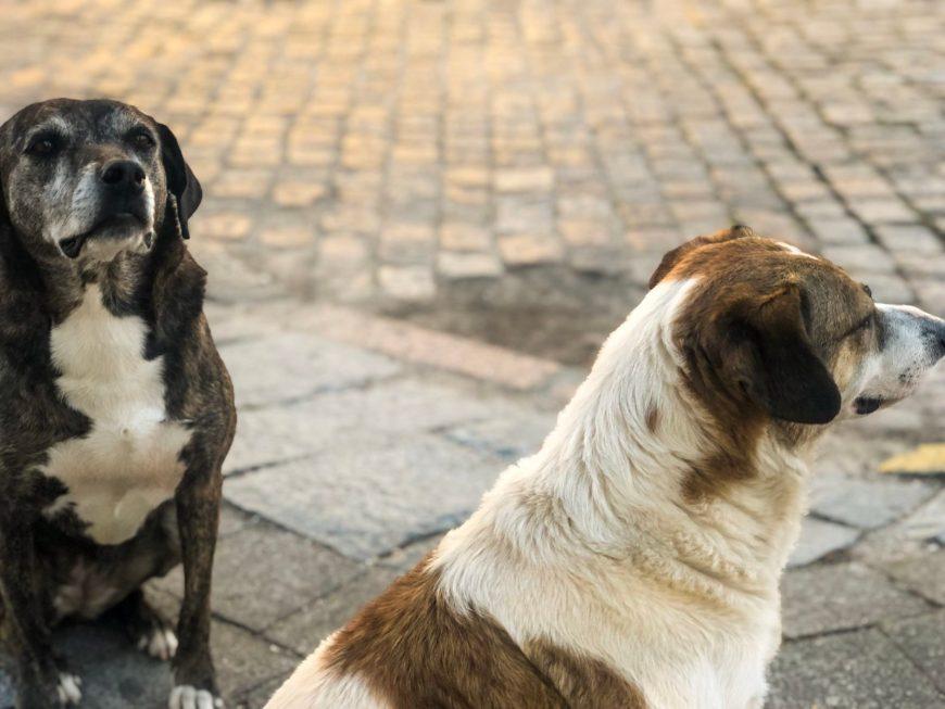 Anita e Giusepe, os cãopanheiros de Laguna