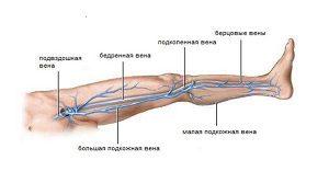 Как проходят вены у человека. Вены бедра: большая подкожная, передняя большеберцовая, общая, глубокая, поверхностная