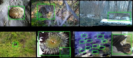 La IA identificadora de especies recibe un impulso de imágenes tomadas por naturalistas ciudadanos