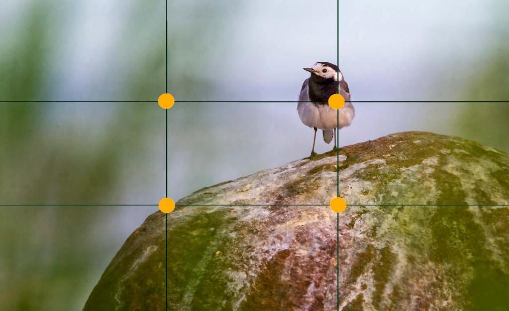 Point de force sur un bergeronnette (© Elena Duvernay) | Vendre ses photos en ligne