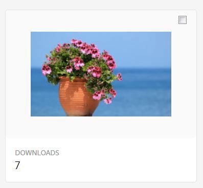 Ventes de Vase de géraniums sur fond d'océan sur Adobe Stock | Vendre ses photos en ligne
