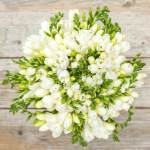 Freesia white Flower, Venera Flowers, online flower delivery dubai