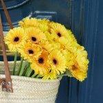 Gerbera Yellow 25 Flower, Venera Flowers, online flower delivery dubai
