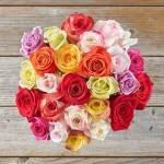 Rose Spring Colors 25 Flower, Venera Flowers, online flower delivery dubai