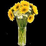 Sunlfower Fresh 10 Flower, Venera Flowers, online flower delivery dubai