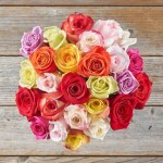 Rose20Spring20Colors20Venera20Flowers201 1