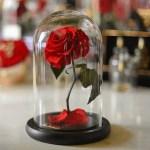 venera flowers forever roses