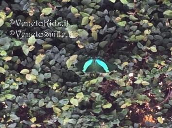 venetokids-veneto-kids-smile-venetosmile-oasi-rossi-santorso-vicenza-casa-farfalle