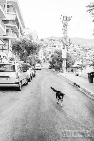 He owns these streets   Piraeus, Greece   Joanna Glezakos