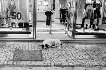 A stray dog sleeps outside a local shop   Athens, Greece   Joanna Glezakos