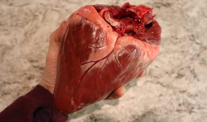 Venison Heart