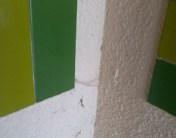 toile araignée 1