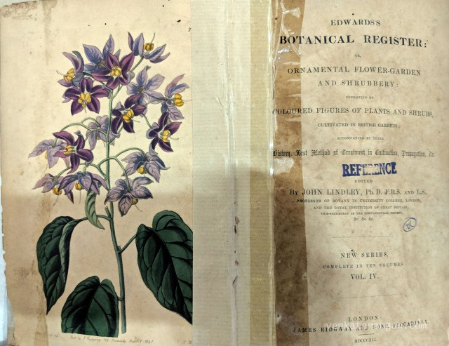 Edwards's Botanical Register - Ornamental Flower-Garden and Shrubbery consisting of Coloured Figures of Plants and Shrubs cultivated in British Gardens. By John Lindley, Published by James Ridgway and Sons, Piccadilly. 1841