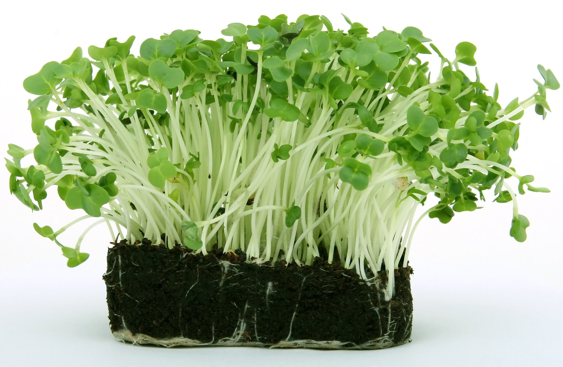 plant roots on soil