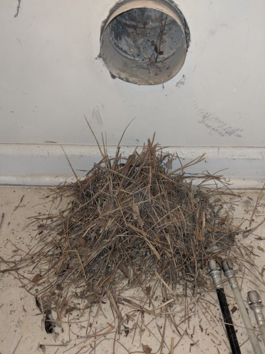 dryer vent birds nest