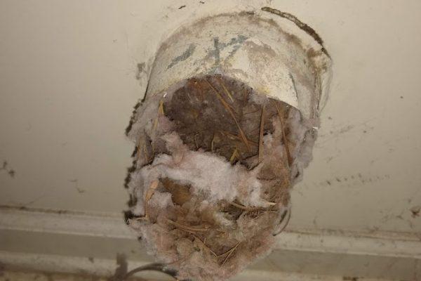 clogged bird nest in dryer vent
