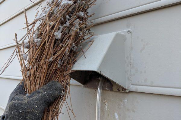 bird in vent greensboro