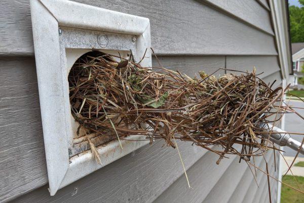 bird in vents greensboro nc