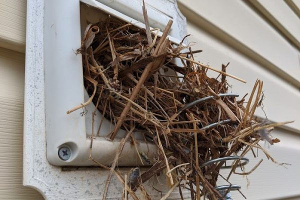 removing a bird nest in dryer vent