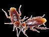 Produits anti insectes
