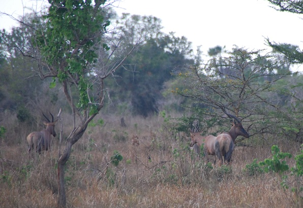 Dodori National Reserve - Ventes Ventures