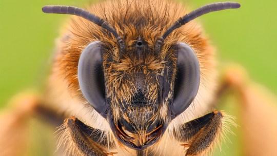 Cosa fanno le api d'inverno? E perché sono così importanti per il Pianeta?