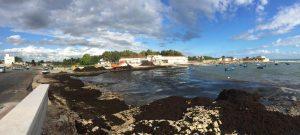 23-08-16 rimossa posidonia dalle spiagge a sud 5