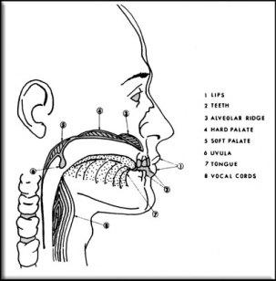 ventriloquism tutorial image