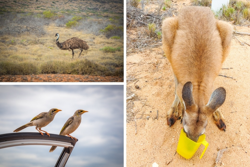 australie-ouest-ningaloo-animaux