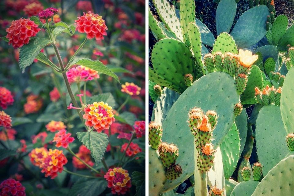 majorque-fleurs