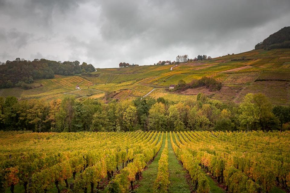 chateau-chalon-vigne-autumn