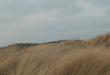 FERGUS releases music video for latest single 'ZELDA MAE'