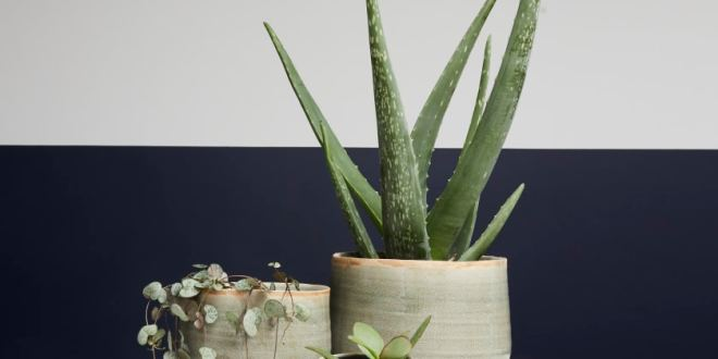 How to Choose the Ideal Pot for Your Plants